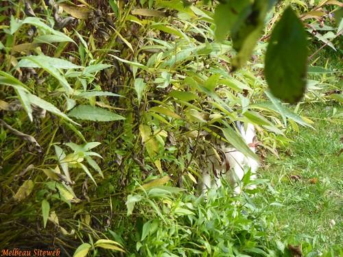 Hermione et le linge du jardin
