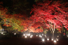 紅葉ライトUP2