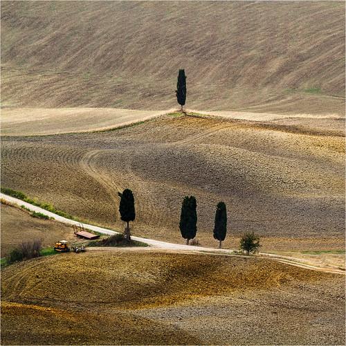trees italy field it tuscany christianwilt