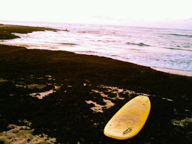 tabla de surf - fuerteventura beach