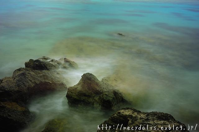 coral reef...