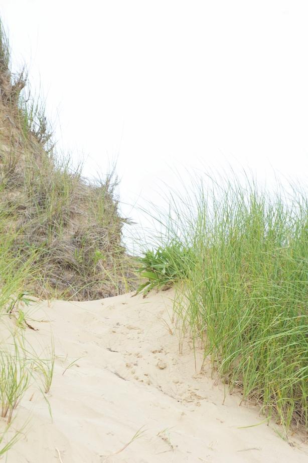 green dune