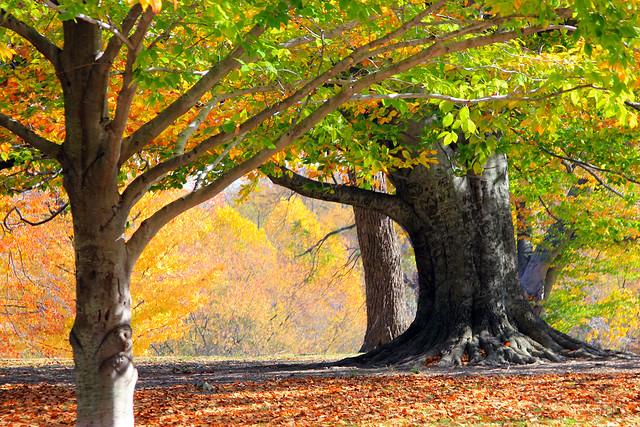 Autumn In Cherokee Park (part 1)