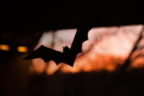 Halloween - 20121030 - 4