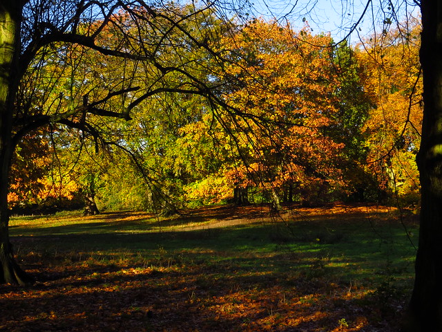 Autumn Trees on Hampstead Heath