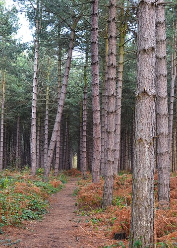 Swinnow Woods 5 by birbee