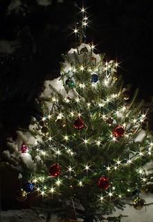 Old Glass / Christmas Tree