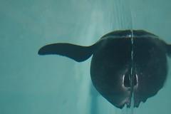 Mirror penguin