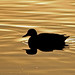 On Golden Pond by shesnuckinfuts