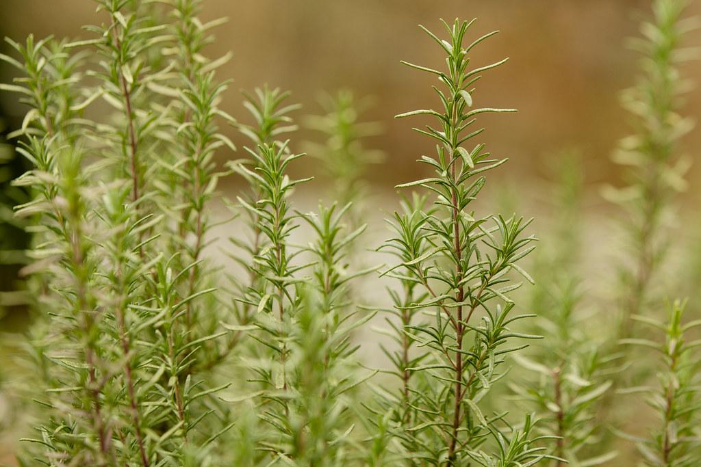 Prairie Herbs Network - Magazine cover