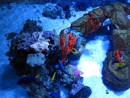 Aquarium 1-6-13