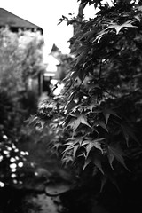 Leaves bw