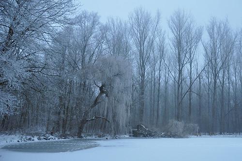 winter mist snow ice nature landscape belgium westerneurope erembodegem naturethroughthelens gerstjens