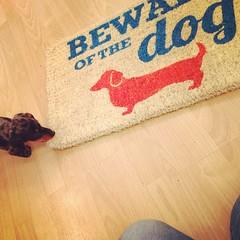#dachshund #lolathesausage