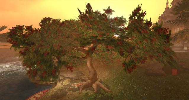 Tree at Daydream Island 3