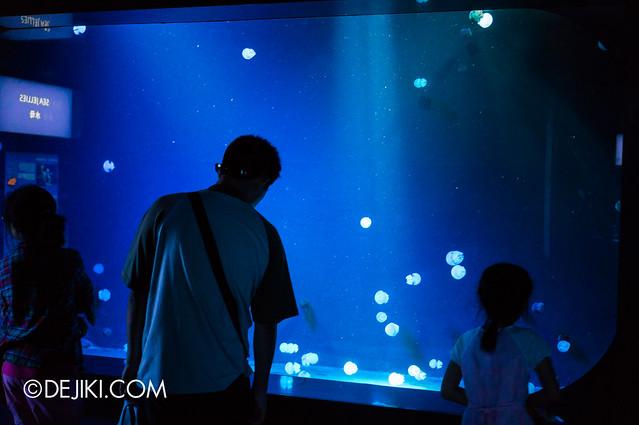 S.E.A. Aquarium - Jelly in the Light