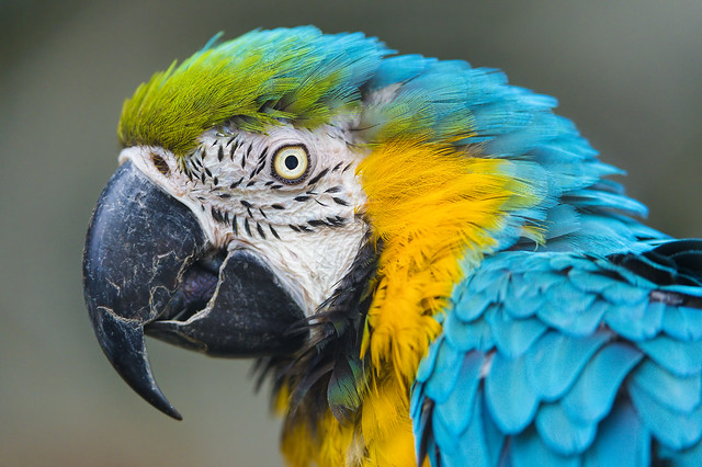 Portrait of a colorful parrot from Flickr via Wylio
