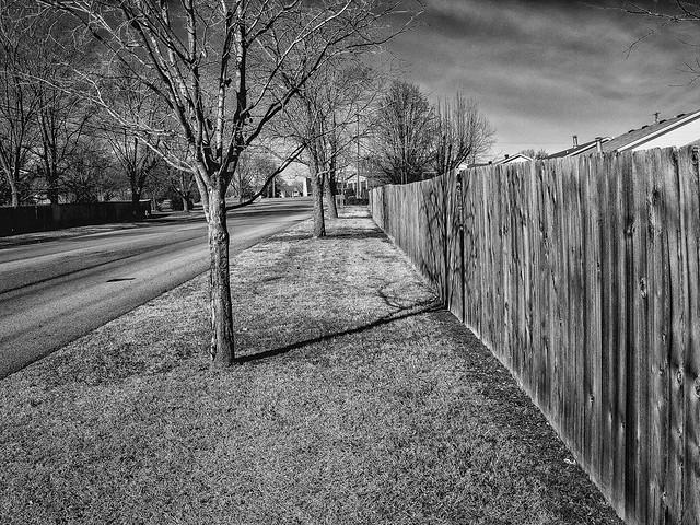 Fence, Street, Tree, Fence