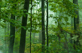 Roaring Forks Mist