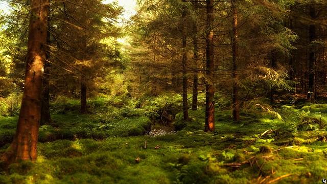 Wallpaper desktop Nature free download