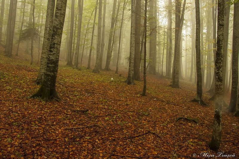 pădure magică
