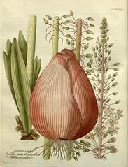 vegetable, flower, plant, produce, drawing, still life, illustration,