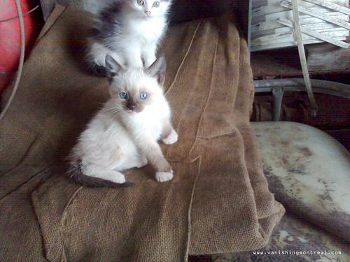Stray kittens 1