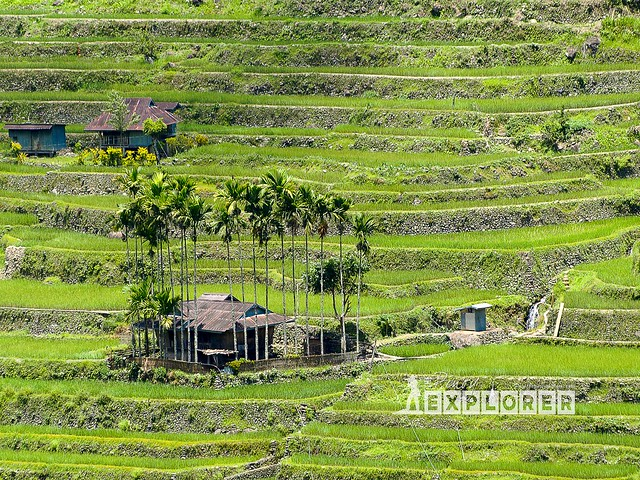 Hapao Rice Terraces