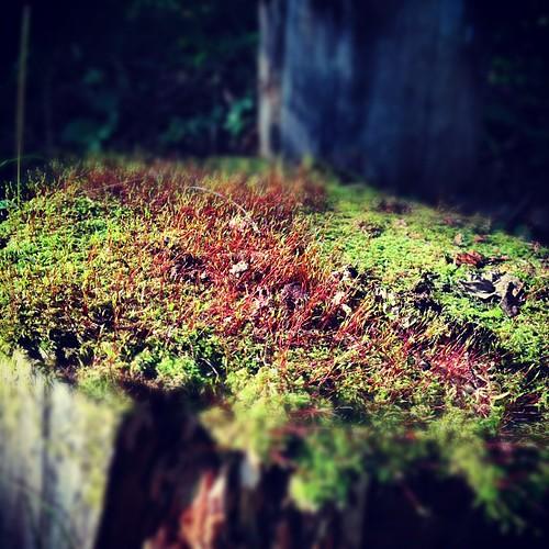 森林セラピー中