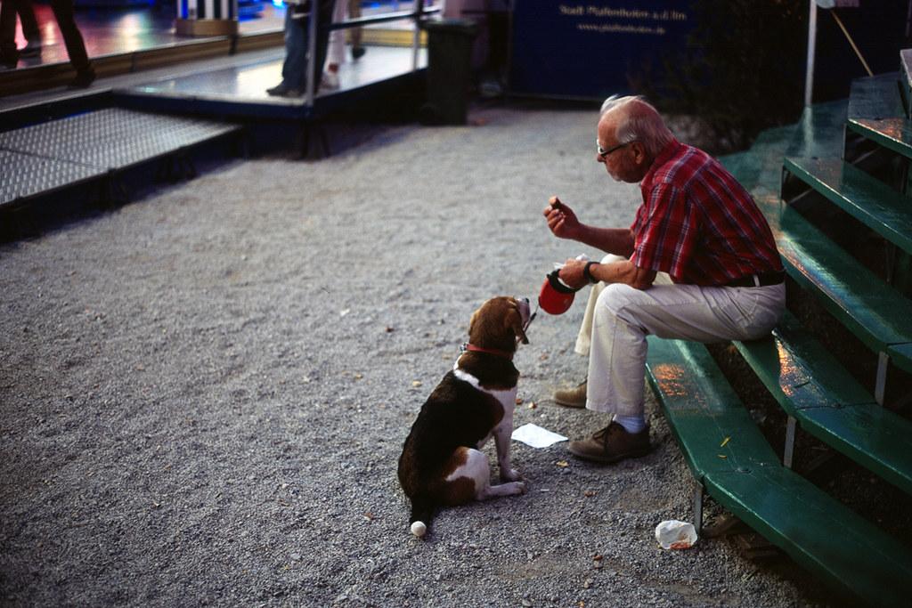 feeding_the_dog