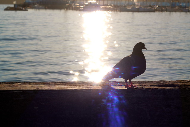 Tuesday: sun and a pigeon friend on the waterfront