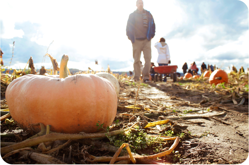 {pumpkin} patch