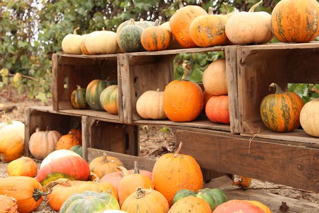 Suzie's Farm Pumpkin Palooza