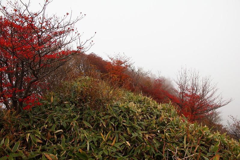 IMG_4173_10-27 Tsubayama
