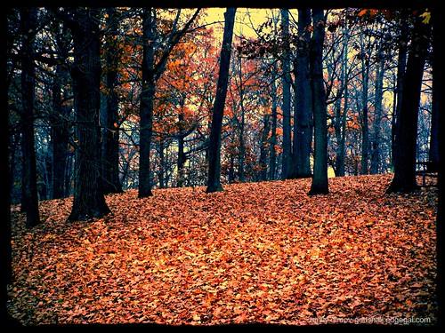 Highland Park by Emilyannamarie
