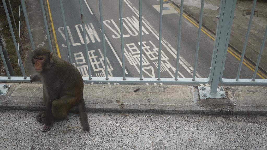 Monkey Overpass