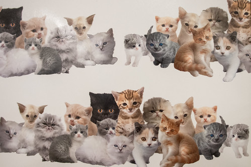 Why do these photoshopped cats look so sad to be around each other?