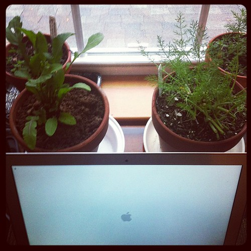 Indoor office garden