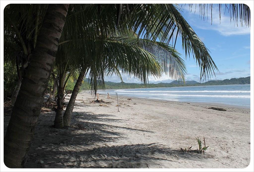 samara beach with palm trees