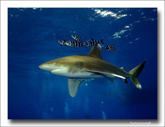 de retour de mer rouge - EGYPTE 8142676594_71bbd9a5a6_z