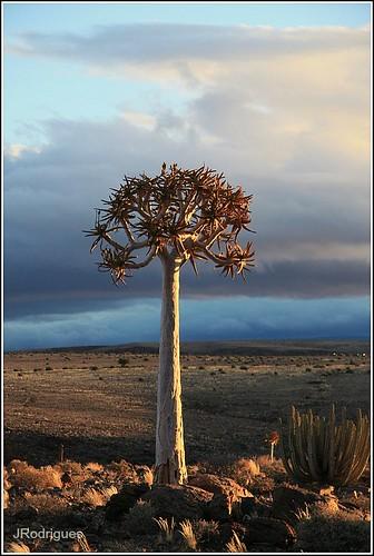 africa namibia 2009 img0261