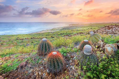 sunset sea cactus clouds cacti landscape rocks waves desert dusk dry aruba caribbean arid