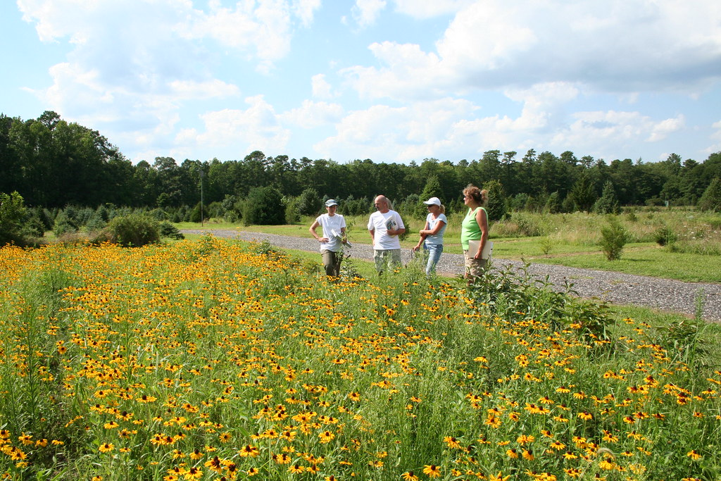 Cape May County Pollinator Habitat