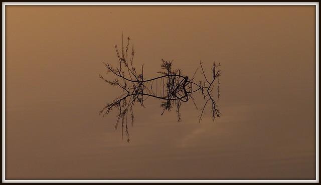Reflection,  Donana National Park, Spain