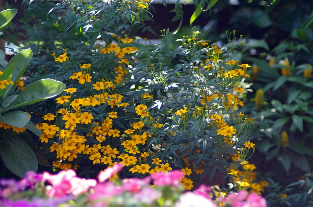難得的冬日,暖和的午後,出門拈花惹草