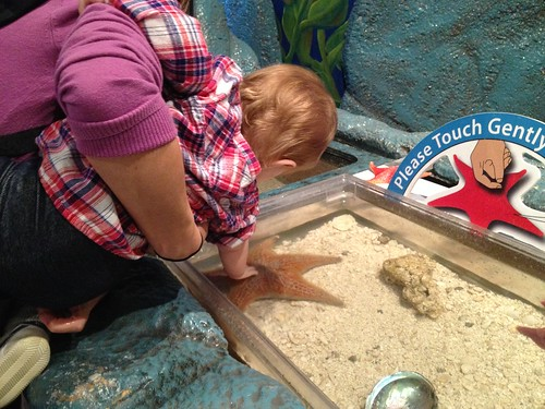 pretty sure she would have squeezed that starfish to death if I let her.