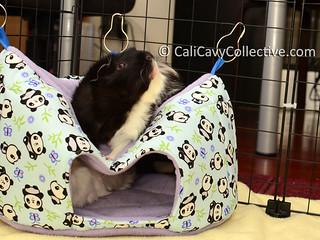 guinea pig fleece toys