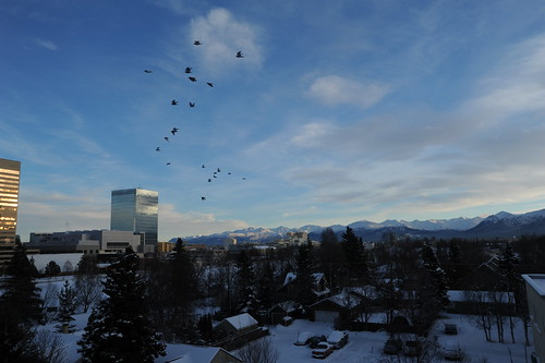 Pigeons flying on a warm day, skyscrapers, buildings, neighborhood, Chugach Range, winter day, slightly cloudy, downtown Anchorage, Alaska, USA by Wonderlane