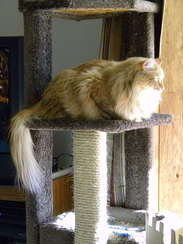 in cat tree