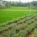 Jardin dans le nord du Vietnam